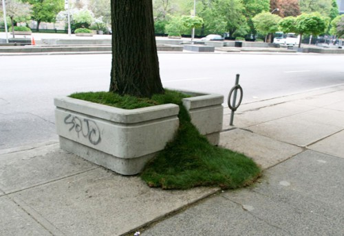 Toronto's Guerrilla Gardeners Think Outside of the Planter Boxes