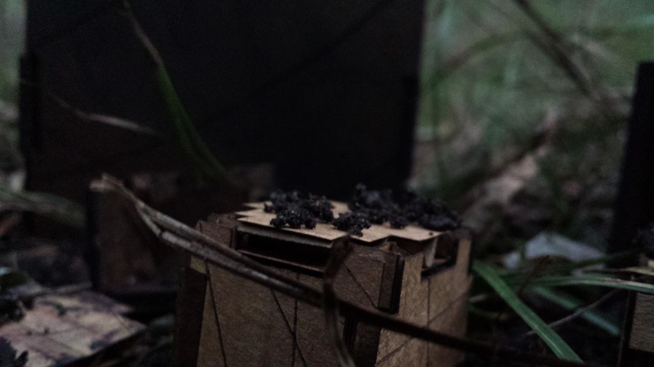 Habitat_Momeni_5